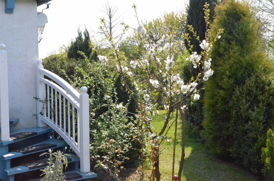 Kirschbaum- Blick in Garten